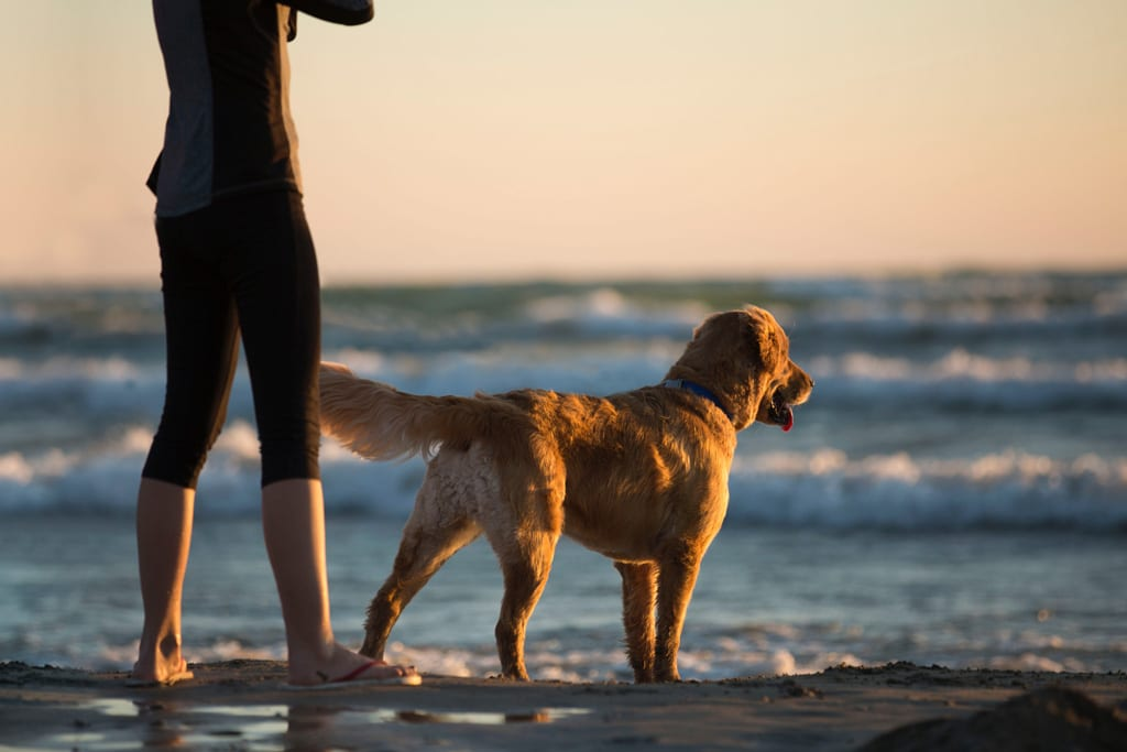 woman and dog standing side by side, looking out into the ocean